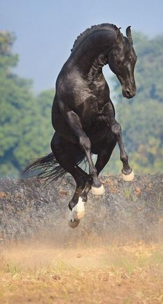 Jumping For Joy. Happy horse!
