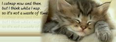 Cat Eyes Facebook Covers | Cats Facebook Covers 2014 - Animals Facebook Timeline Cover Photos ...