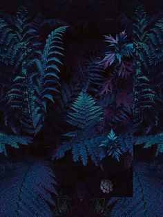 FINESSELANDE - Enigma (album cover)