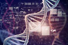 Čo všetko odhalia genetické testy?  Dnes sa pomaličky výživa uberá aj smerom genetického testovania, avšak to ešte nie je dostatočne rozšírené.  Isteže jedna vec sú genetické predpoklady a druhá vec realita, ktorú zažívate. Pretože vaša strava a životný štýl ovplyvnuju vyjadrovania genov.   Vlado Zlatoš si nechal urobiť rozsiahle gen.testy a interpretáciu výsledkov a napr. zistil, že:  -má genotyp, ktorý zvyšuje riziko dostať v neskorom veku Alzheimera  pokračovanie v článku