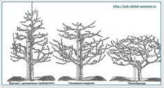 как обрезать деревья в саду