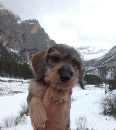 Bassotto sulle Dolomiti