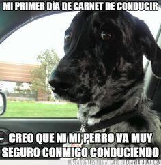 Un perro no puede mentir con la mirada