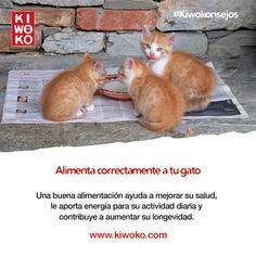 #Kiwokonsejos Y consulta con nuestros expertos cuál es la alimentación más adecuada para las necesidades de tu gato. ¡Miau!