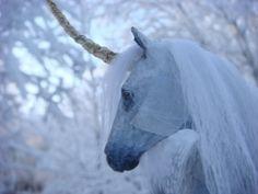 Fairy horse.