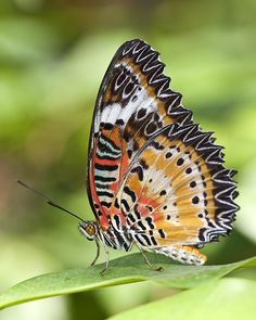 Annual spring butterfly exhibit at Dow Gardens in Midland, Michigan, photo by Jason Heal