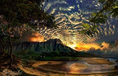 """""""Manoa Aali'i"""" Hawaiian Art   by Satoshi Matsuyama - Beautiful Hawaii"""