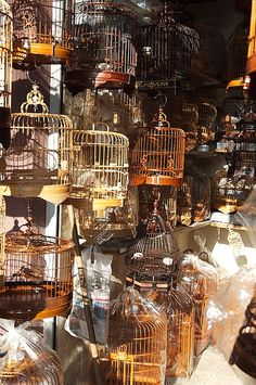 Bird cages by sixtybysixty,