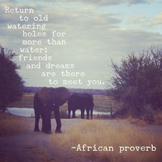 Return to old watering holes for more than water; friends and dreams are there to meet you. ~ #African proverb #quote