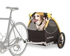 Image result for Dogs on push bikes