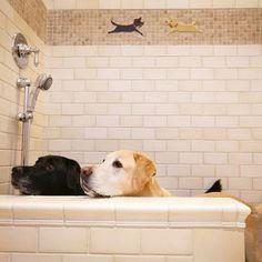 Dedicated dog shower in the garage  BRILLIANT idea!