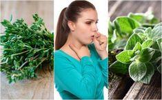 Fashion and Lifestyle Aloe Vera, Cancer Treatment, Medicinal Plants, Health Remedies, Healthy Life, Lose Weight, Ecuador, Lifestyle, Fashion