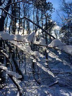 #winterwonderland #sunnysunday #naturelove #budapest