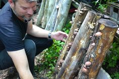 156 Best mushroom cultivation images in 2020   Mushroom ...