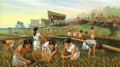 Yayoi wet rice farming in ancient Japan by Nihonnoruutsu