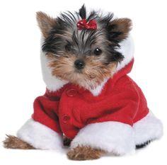 Christmas Yorkie #yorkshireterrier