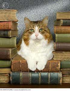 every library needs a dedicated book keeper