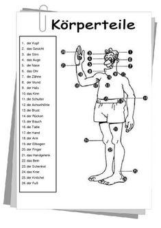Körperteile: Ein Beispiel aus der Web-Seite de.islcollective.com, wo man superschöne Arbeitsblätter für DaF Unterricht finden kann