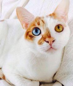 10 Famous Internet Felines