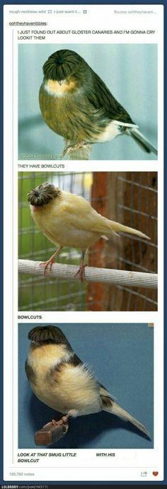 It's the bird version of Moe Howard!!!!