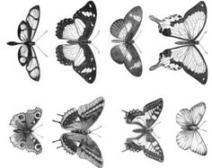 VICTORIAN Butterfly Line Art Illustrations Digital Collage Sheet for Mixed Media, Steampunk.  TV638
