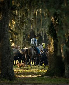 ride cowboy ride. This is somewhere in the south with the spanish moss hanging everywhere