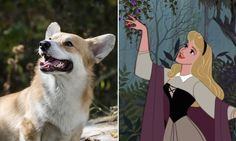 12+Perfectly+Matched+Corgis+and+Disney+Royals