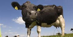 Dairy farmers set to suffer annual milk price decline