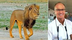 **NEWS** Dentist that killed Cecil the Lion could be set to make 23 million dollars in movie deal.
