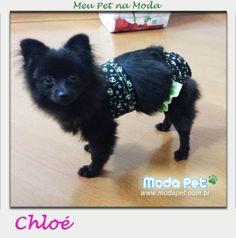 Meu Pet na Moda   Estreiando o álbum #MeuPetnaModa em 2014, a linda Chloé vestindo Conjunto Verão #meupetnamoda #modapet