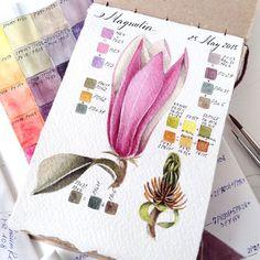 Watercolor botanical sketch. Magnolia || #limkina #limkina_art || Winsor&Newton watercolor, Kolinsky sable paintbrushes