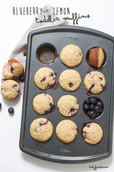 blueberry   lemon toddler muffin - babyfoode