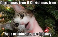 I can relate to that... 😼 😹 #zizimut #cat #kitten #kitty #purr #gato #gatinho #christmas #natal #naughtycat