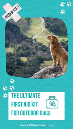 This dog-specific first aid kit gives you comprehensive medical solutions for your trail buddy. It is catered to the types of injuries dogs encounter most on the trail – primarily to their paws, with an assortment of dressings, bandages and tools like the splinter picker/tick removers … plus the kit contains a Pet First Aid guide. #firstaid #dogs Tick Removal, Travel Products, Dog Travel, First Aid Kit, Dressings, Your Pet, Trail, Medical, Tools