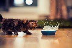 El gatito mas tierno #kitten, #cutest kitten, #gatito, #gato