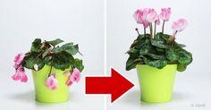 Δείτε ΠΩΣ θα επαναφέρετε στη Ζωή τα Μαραμένα Φυτά σας, με ΑΥΤΑ τα 3 Φυσικά Συστατικά που Υπάρχουν σε ΚΑΘΕ Σπίτι! -idiva.gr