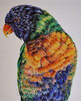 parrot ballpoint pen drawing, bic illustration http://saraportrait.deviantart.com/