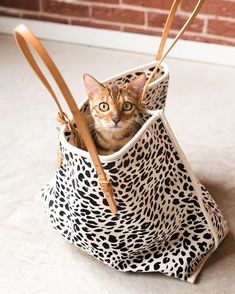 Cat. Bag. A classic combo.