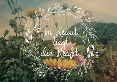 Home - kräuterwerk Kraut, Plants, Health And Wellness, Medicinal Plants, Organic Beauty, Round Round, Florals, Planters, Plant