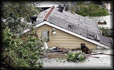 August 29, 2005 | Hurricane Katrina | A pet waits for rescue...