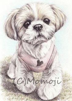 Shih Tzu Hund, Shih Tzu Puppy, Teddy Bear Dog, Puppy Grooming, Dog Artwork, Purebred Dogs, Dog Memorial, Losing A Dog, Terrier Dogs