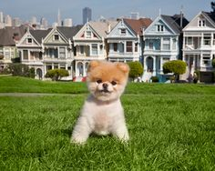 Boo in San Francisco