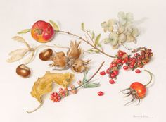 Beverly Allen - Collection with hazelnuts, pomegranate and Michelia seedpod Watercolour on vellum