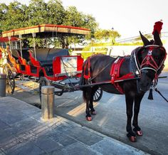 """#Repost @fisamasi  """"The lady in red  is dancing with me  cheek to cheek  There's nobody here  it's just you and me  It's where I want to be..."""" #lookinggood #prettygirl #mule #carriage #surey #ladyinred #NewOrleans #Louisiana #tour #partnerincrime #twinkletoes #NOLA #Chicory #RoyalCarriage #RoyalCarriages #TakeATour #JacksonSquare #ISingToHer"""