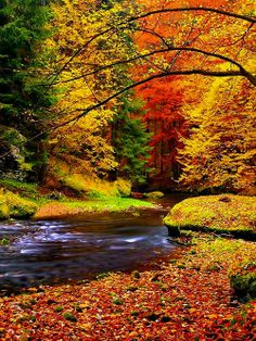Autumn landscape, colorful leaves on trees, morning at river. Vinyl Wall Mural - Seasons Autumn landscape, colorful leaves on trees, morning at river. Wall Mural ✓ Easy Installation ✓ 365 Days to Return ✓ Browse other patterns from this collection! Fall Pictures, Nature Pictures, Photos Of Nature, Pretty Pictures, Autumn Photos, Amazing Pictures, Autumn Scenes, Amazing Nature, Belle Photo