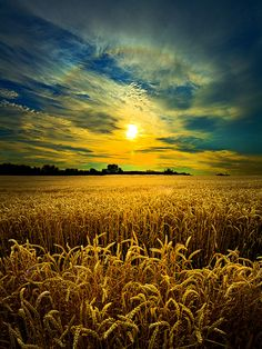 Wheat field sunset background with rye silhouettes Stock Photo Beautiful World, Beautiful Places, Fields Of Gold, Wheat Fields, Jolie Photo, Farm Life, Amazing Nature, Nature Photos, Pretty Pictures