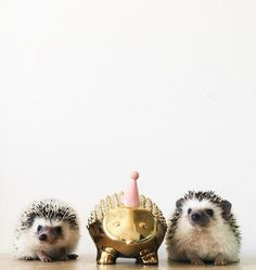 One of these things is not like the other! (via @hedgehographer's IG)