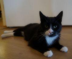Loui has been growing ;)