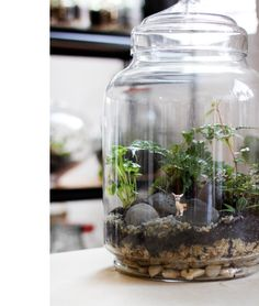 I think terrariums are so cool - they're like little mini ecosystems, but they also add life and color to a room.