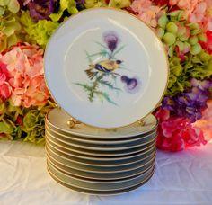 12 Vintage Hutschenreuther Porcelain Audubon Bird Plates ~ Gold